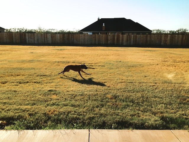 Murdock running in Texas