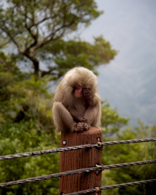 disinterested monkey