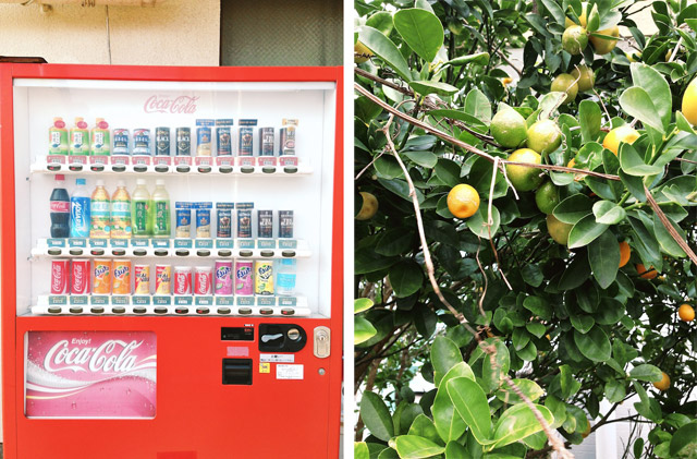 tanegashima vending machine