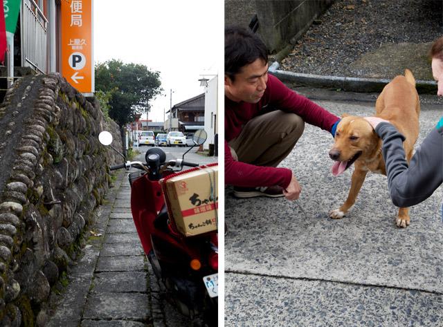 yakushima dog