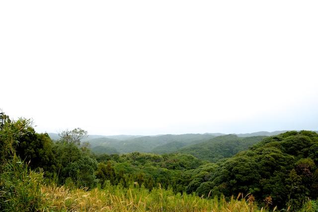 tanegashima forest