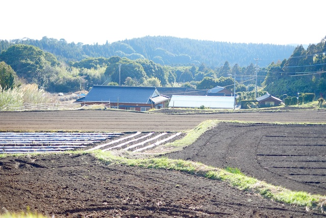 tanegashima farm