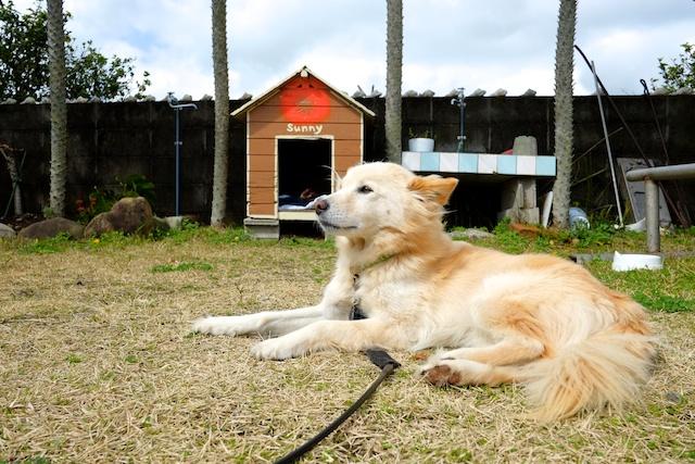 sunny the dog