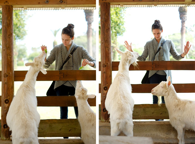 tanegashima petting zoo